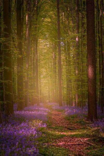 Promenade au bois de Halle au printemps