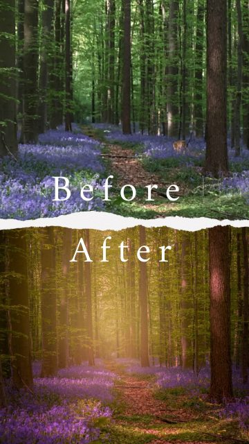 Before & After : Hallerbos